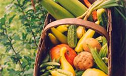 Farm Vacation Rentals NC