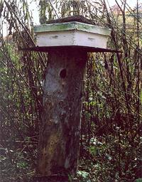 RG-Bee Tree Hive