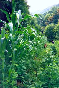asheville nc farms