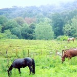 Farm Vacation Rentals NC