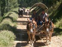 wagon train rides nc