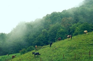 nc horseback riding vacations