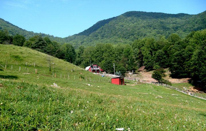 asheville farm nc